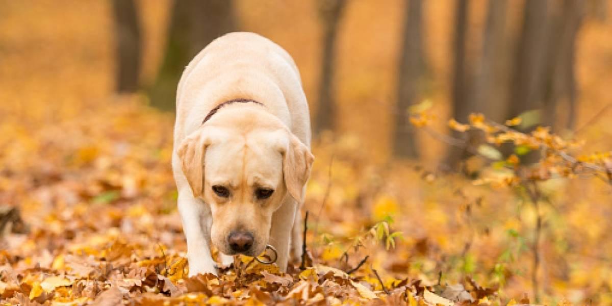 ¿Qué tuvo que ver un aguacero con la muerte de un perro antiexplosivos?, esta fue la razón