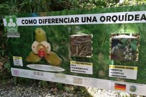 Orquigonia