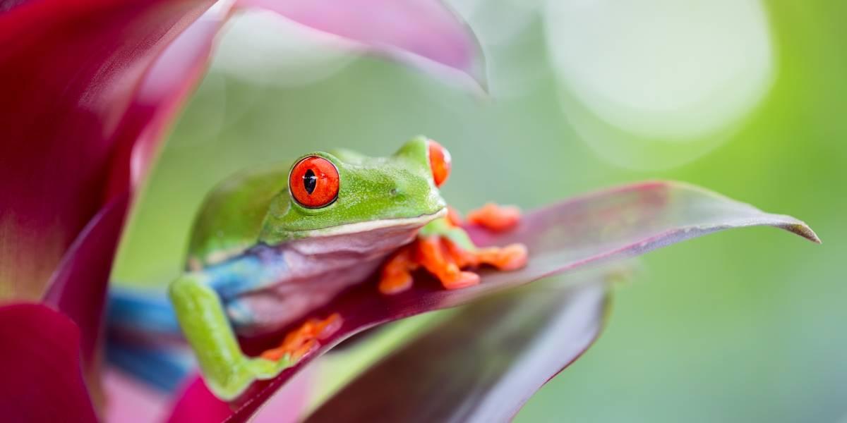 Costa Rica  es ecoturismo, ciencia y aventura