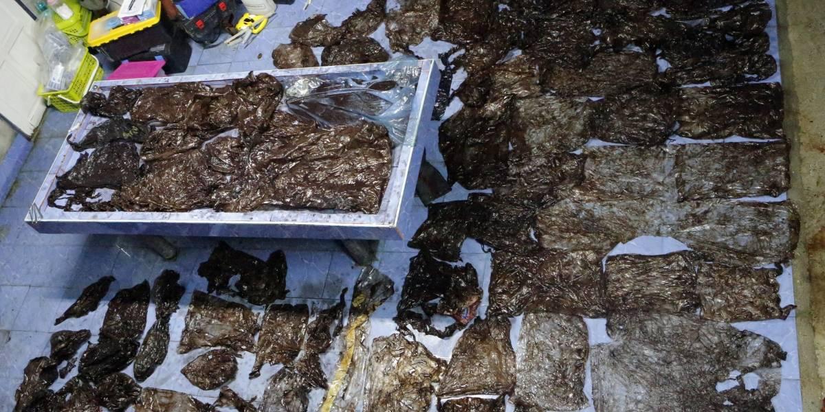Muere una ballena tras tragarse ochenta bolsas de plástico