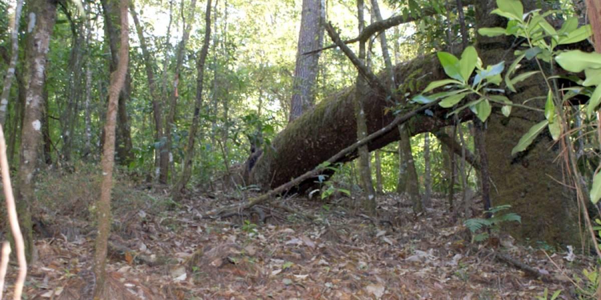 Aumenta la deforestación en el sur y costa de Jalisco