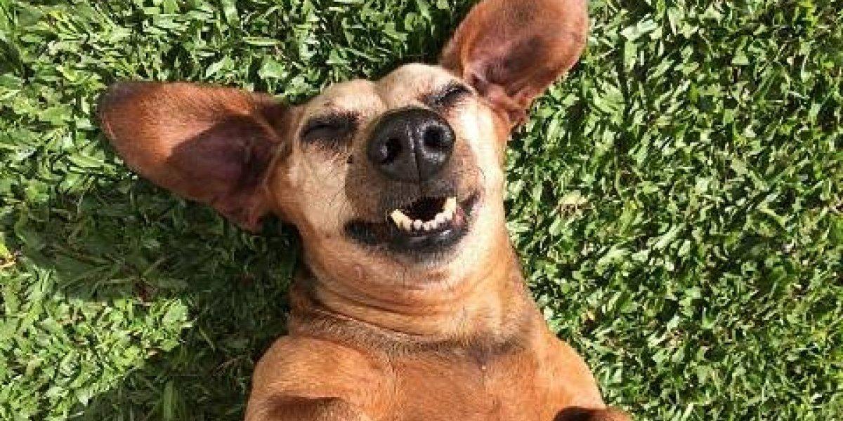 Fotos demuestran que no se debe hacer imágenes panorámicas con tu mascota