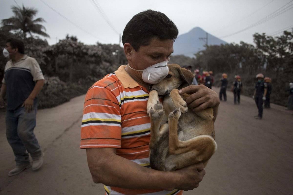 Un residente carga a su perro después de rescatarlo cerca del Volcán de Fuego, en Escuintla, Guatemala, el lunes 4 de junio de 2018. (Foto AP / Luis Soto)