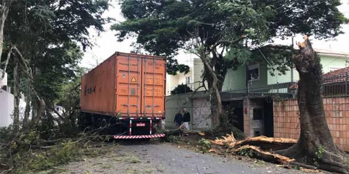 Caminhão derruba árvore na zona sul de São Paulo