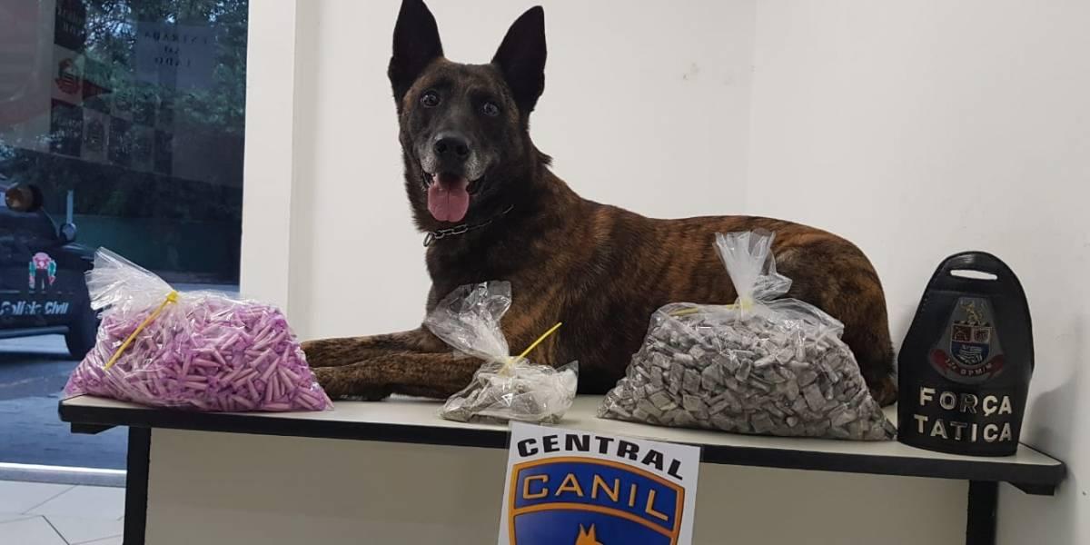 Cães da PM ajudam em apreensão de drogas na zona sul de SP