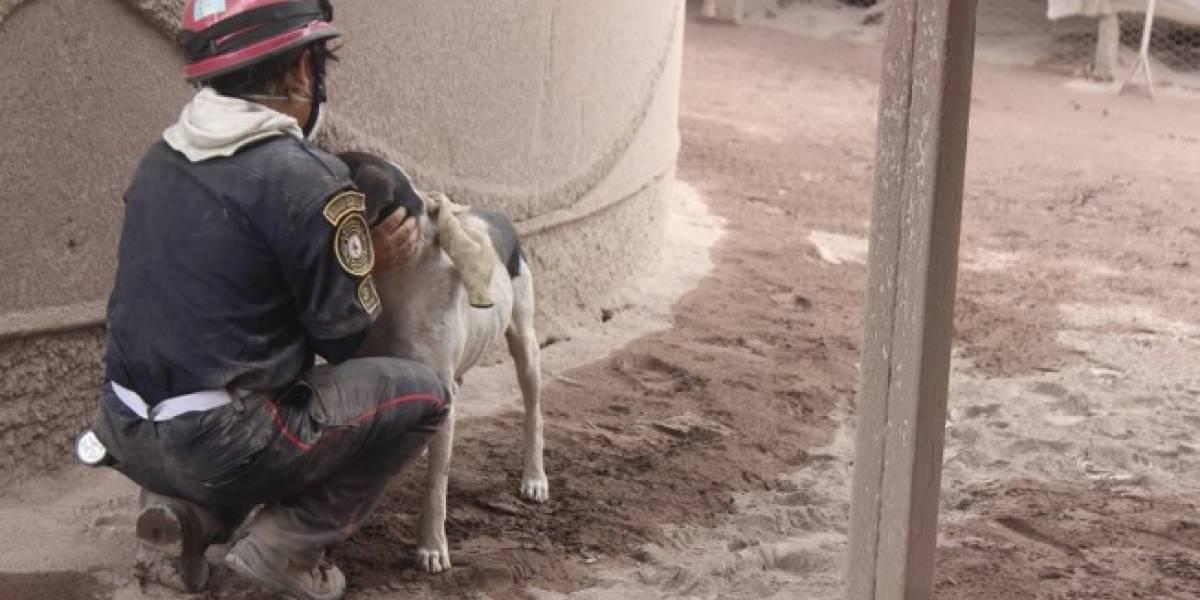Perrito ayuda a rescatistas a hallar la vivienda soterrada de sus amos