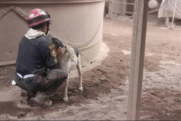 Perro ayuda a rescatistas en Guatemala