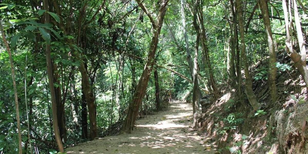Parque reabre com macacos sobreviventes à febre amarela em Votorantim