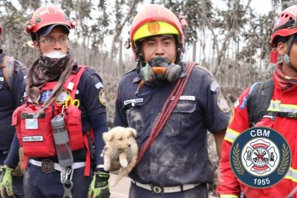 rescate de animales por erupción del volcán de Fuego