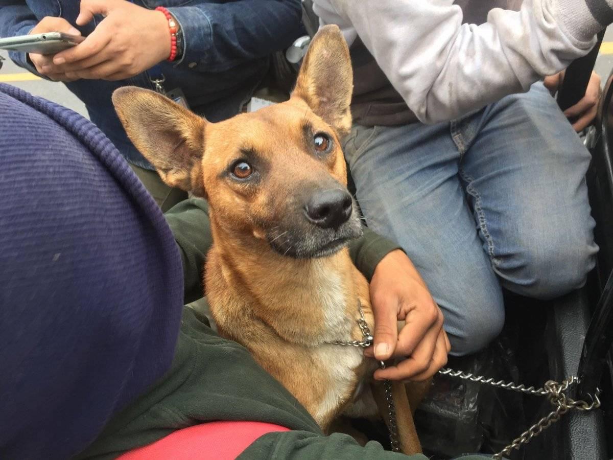 perro rescatado tras erupción del volcán de Fuego