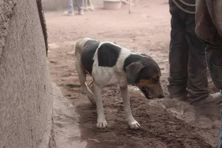perro Guatemala