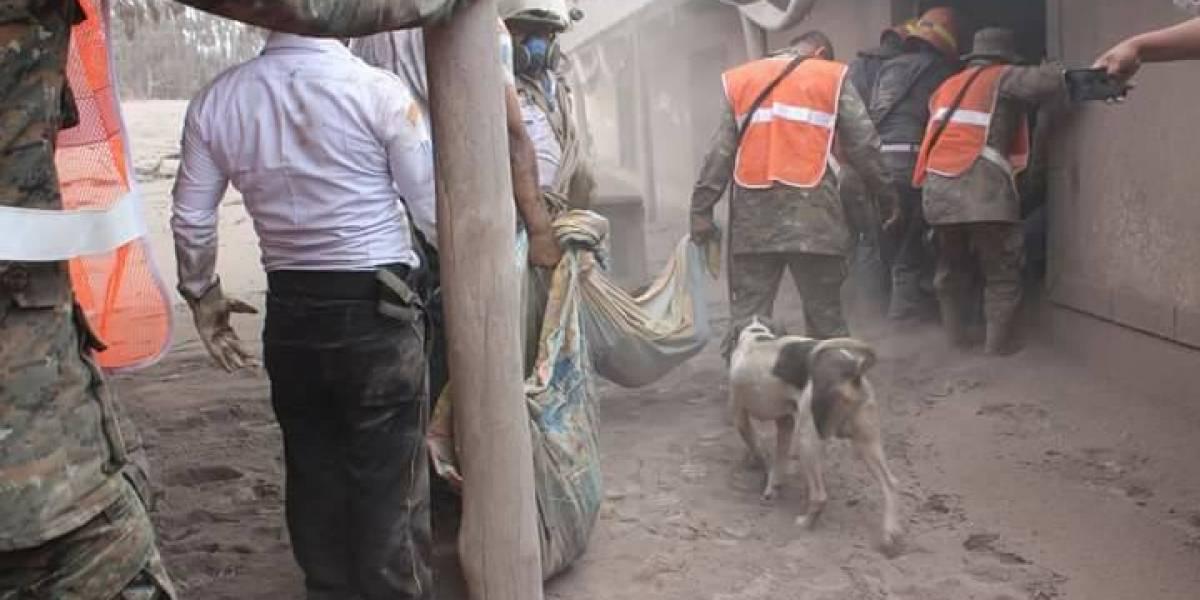La heróica hazaña del perro que ayudó a encontrar a su familia tras la erupción del volcán en Guatemala