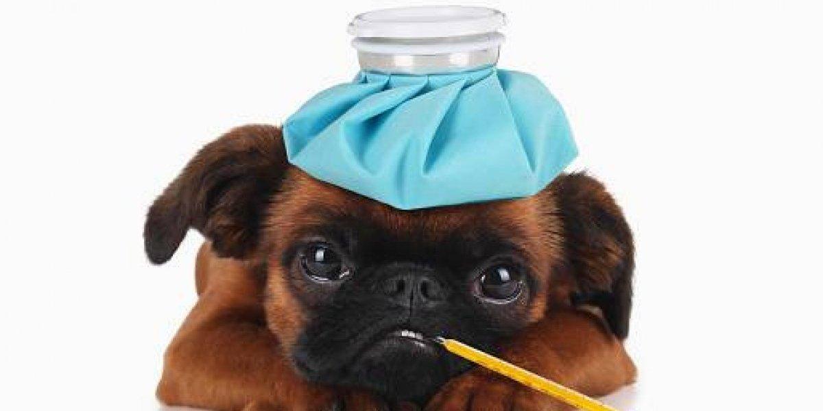 ¡Los cachorritos no!: Los perros podrían ser el portador del próximo brote mortal de gripe entre los humanos