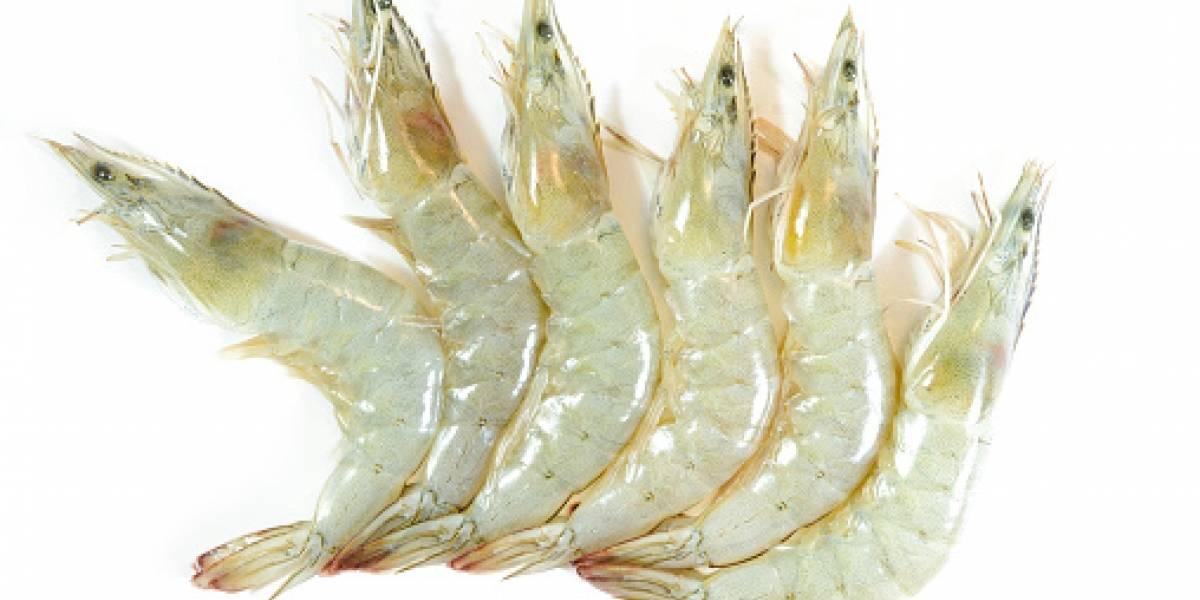 Corte Suprema de Brasil suspende la importación de camarón ecuatoriano