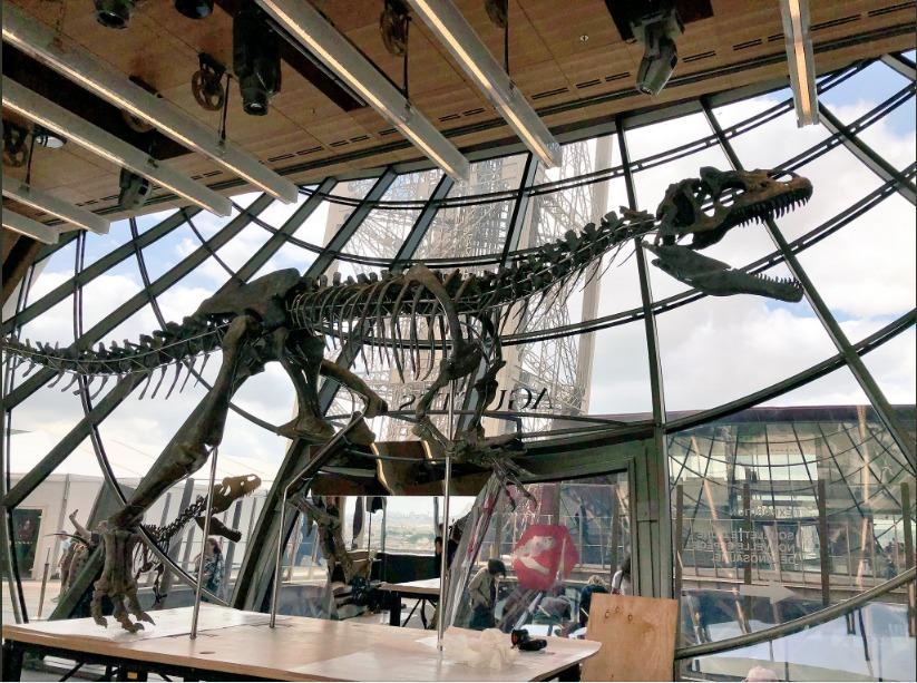 Fósil de especie desconocida de dinosaurio es subastado y vendido en dos millones de dólares