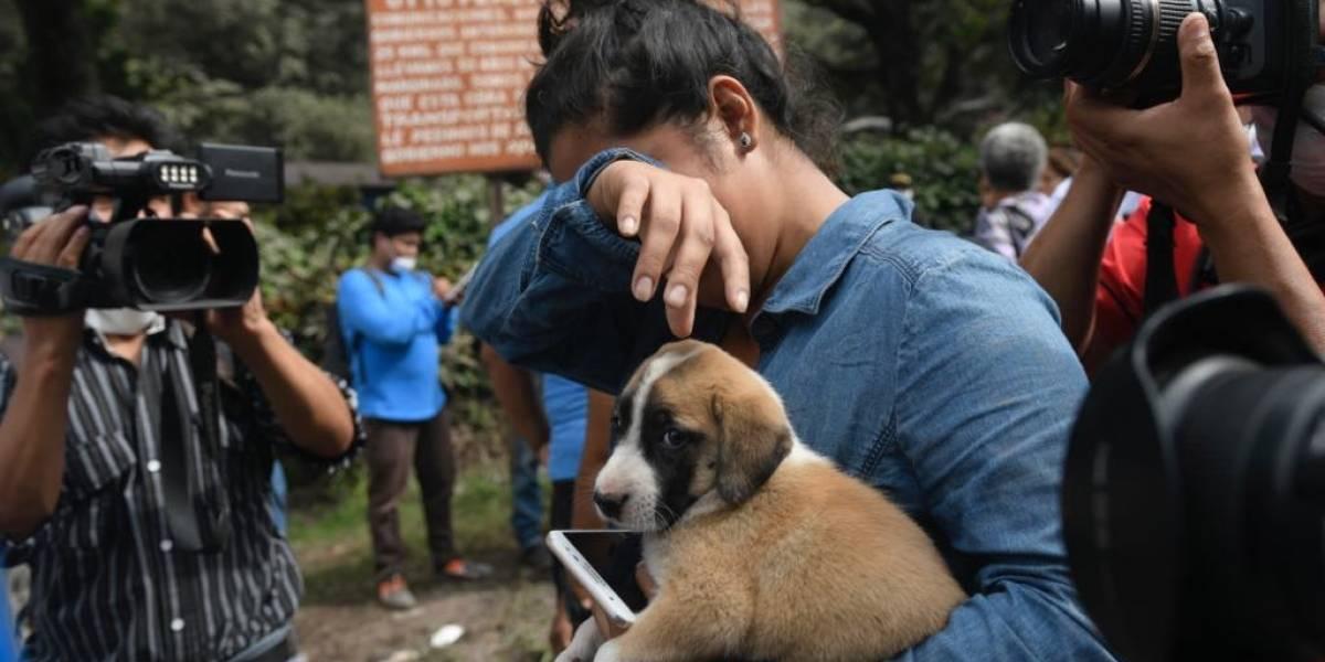 Menor llegó hasta su casa buscando a su familia y solo encontró a su cachorro