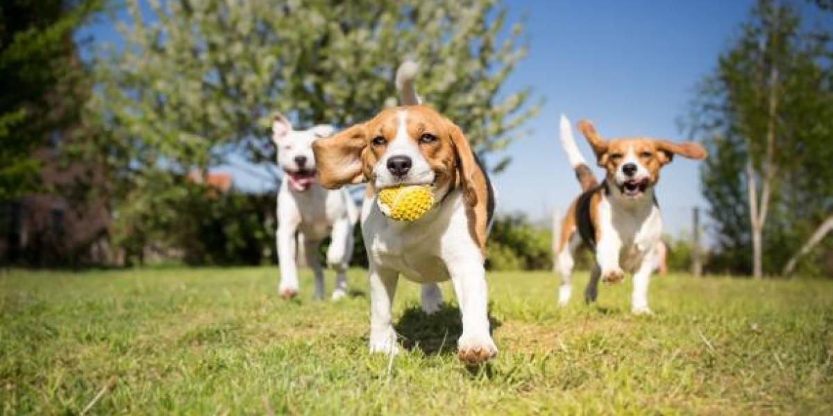 Científicos determinan la edad exacta a la que los cachorros son más lindos