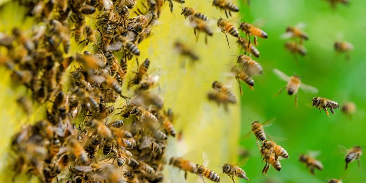 Anciana fue picada dos mil veces por un enjambre de abejas