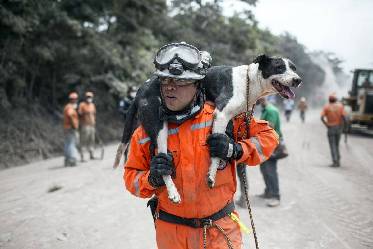 Un rescatista carga a su perro entrenado en búsqueda de víctimas hacia otra zona afectada cerca del Volcán de Fuego en Escuintla, Guatemala, el martes 5 de junio de 2018