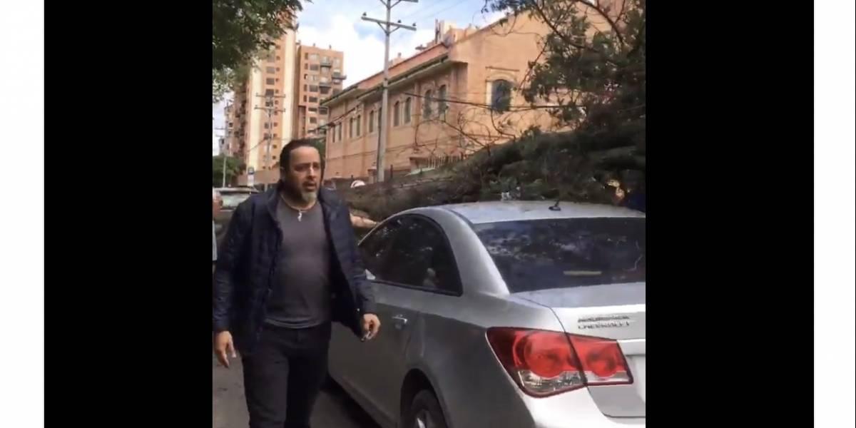 ¡Atención! Cayó un árbol en la calle 122 con avenida 19 en Bogotá sobre varios vehículos