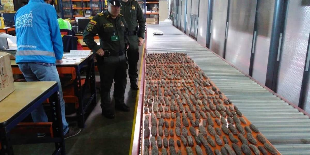 Incautan en Bogotá 540 animales marinos que pretendían exportar a Hong Kong