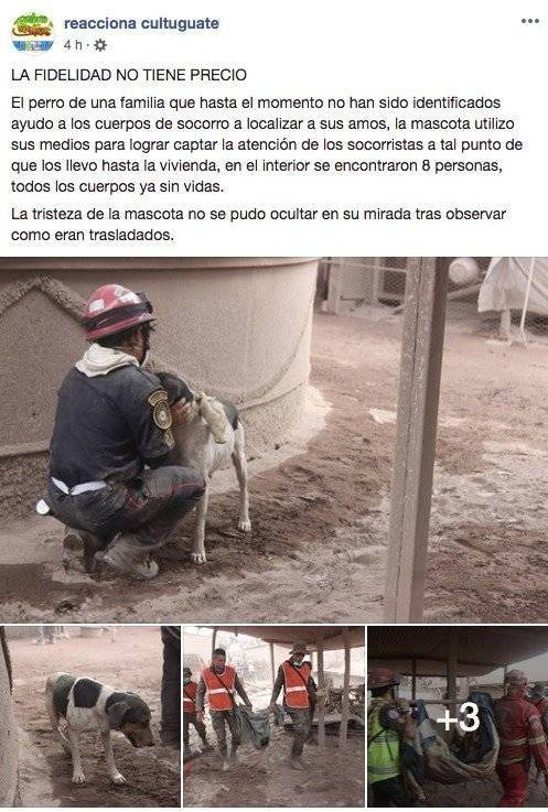 Foto: reacciona cultuguate