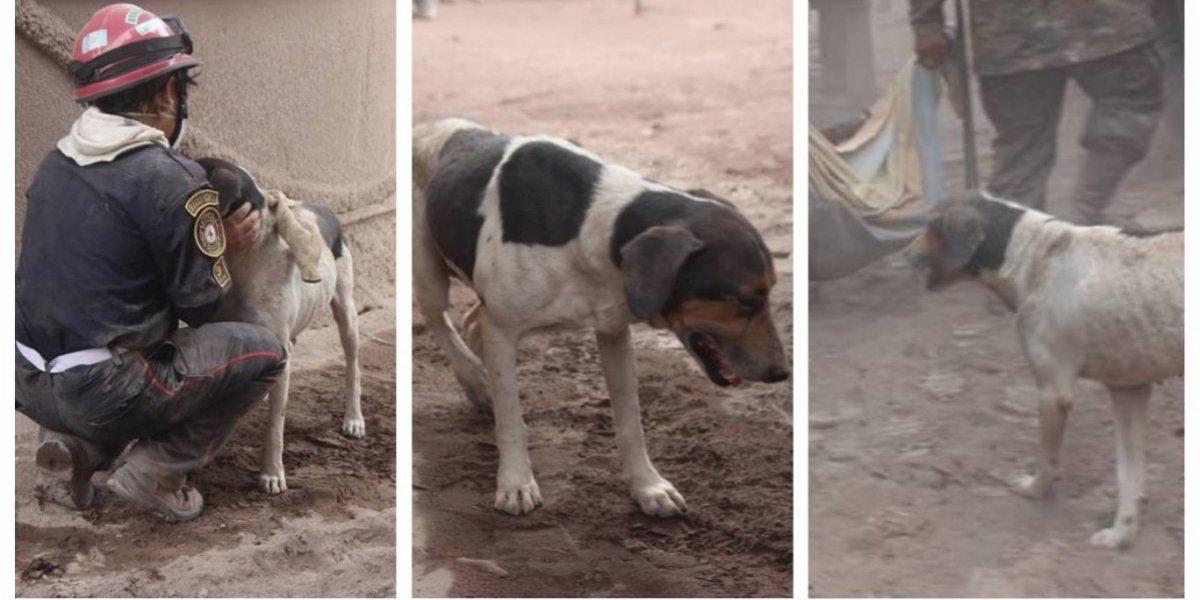 VIDEO. El perro que ayudó a localizar a sus amos está a salvo y tiene nuevo nombre