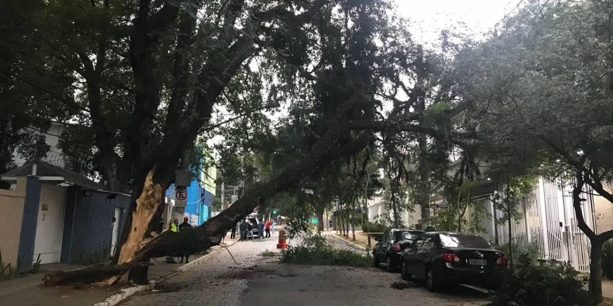 Queda de árvore interdita rua na zona sul de SP; linhas de ônibus são desviadas