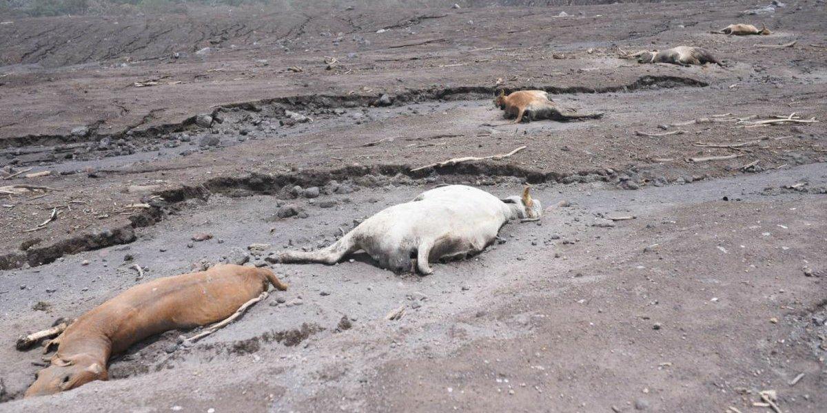 EN IMÁGENES. El desolador panorama en San Miguel Los Lotes a cuatro días de la tragedia