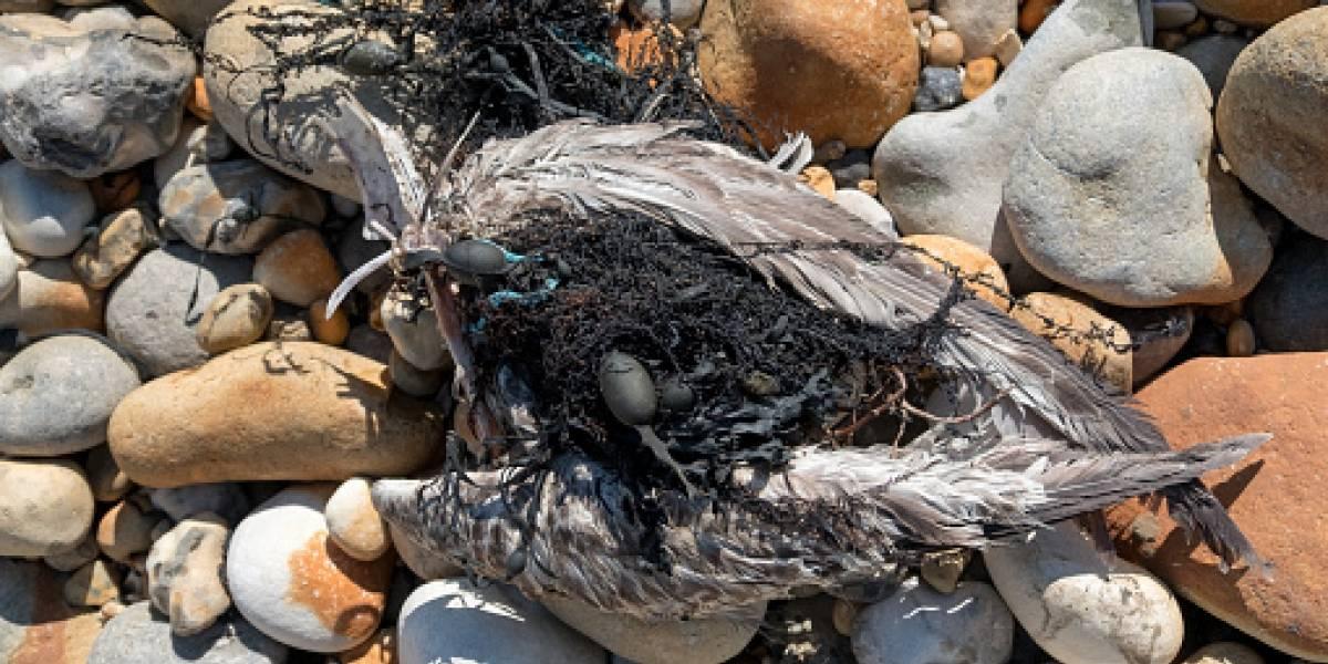 Ciencia explica la muerte de miles de aves y prevé un cataclismo