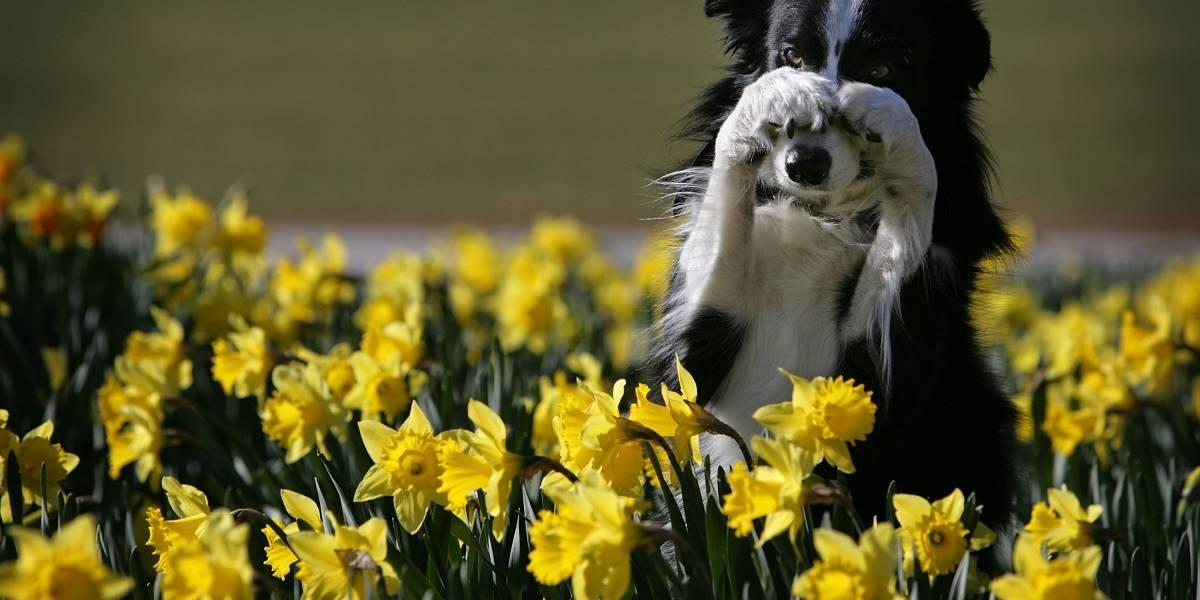 Como enseñarle a una mascota afrontar la pérdida de su amo o un hermano peludo