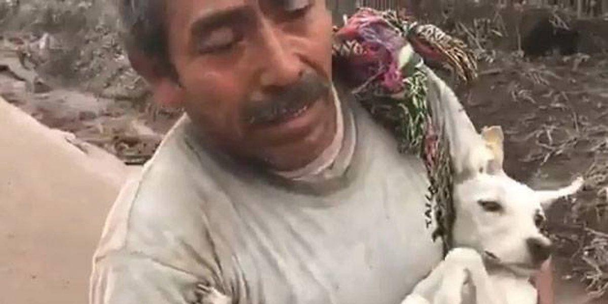 Hombre logró rescatar a su perrita entre las cenizas luego de erupción de volcán en Guatemala