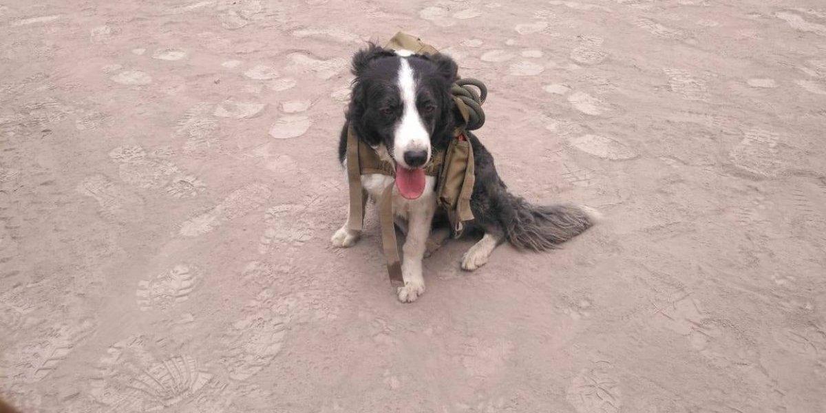 ¿Porqué no hay perros de búsqueda y rescate en áreas devastadas por erupciones volcánicas?