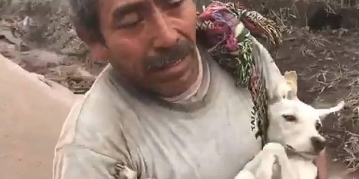 Homem consegue resgatar cão perdido durante erupção na Guatemala
