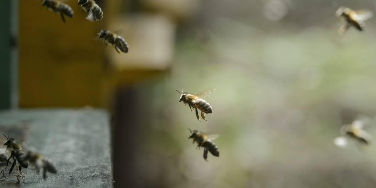No fue culpa de Petro: por esta razón abejas atacaron a uribistas en La Loma