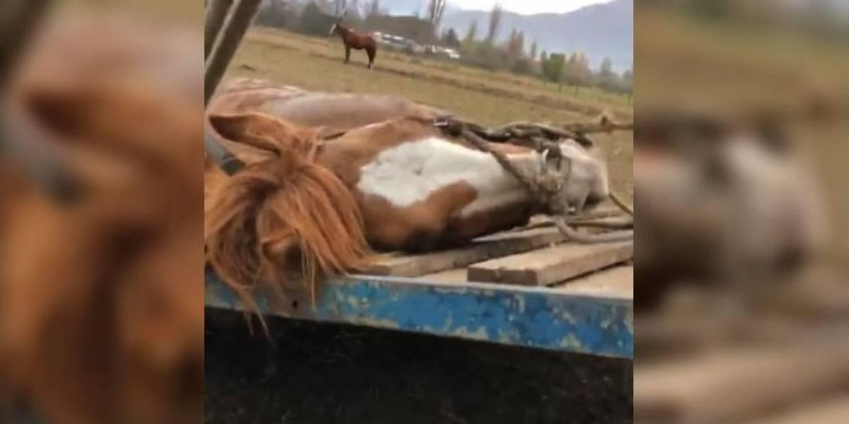 Joven capta brutal agresión a caballo en Valparaíso y es agredido