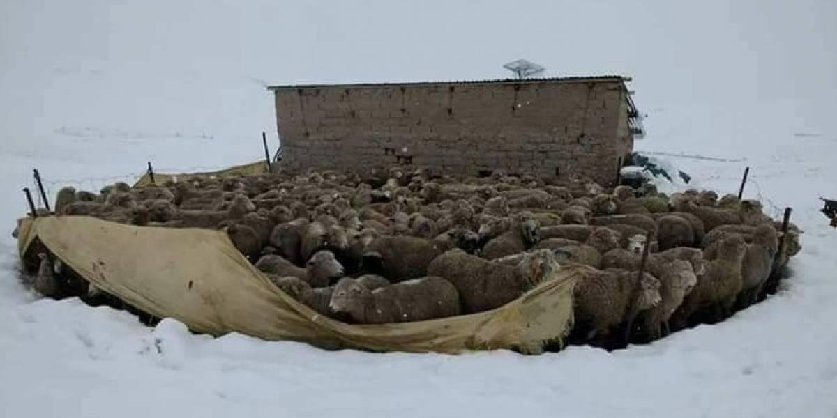 ¿Y nunca llegó la nieve?…no pasó mucho en Santiago pero así se cubrió de blanco el resto del país