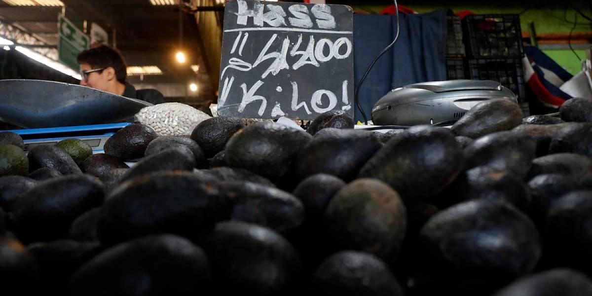 """""""Ola de crimen del aguacate"""": medio internacional se hace eco del creciente robo de paltas por su alto precio"""