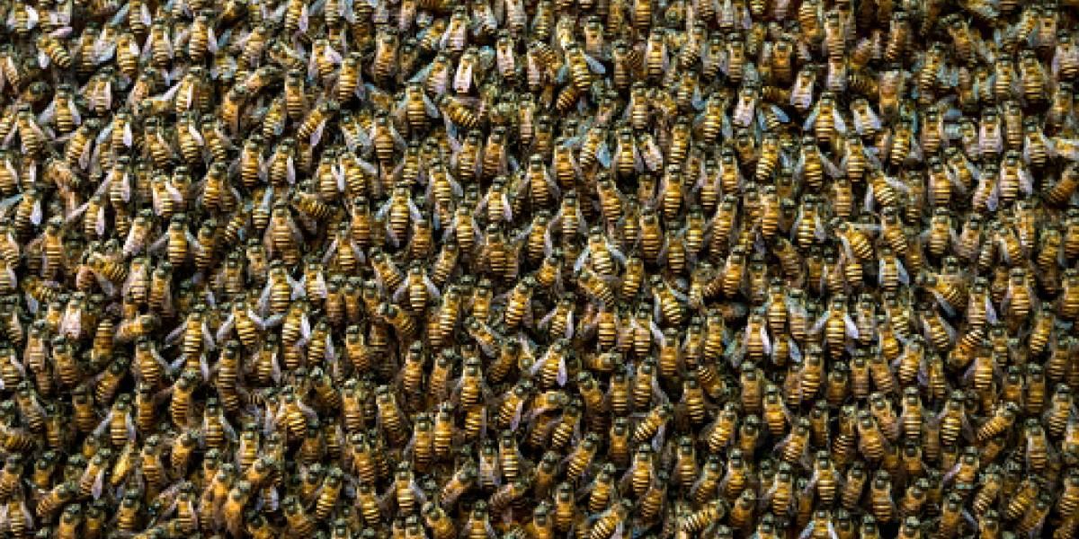 ¡Todos al suelo! Ataque de abejas paraliza partido de fútbol