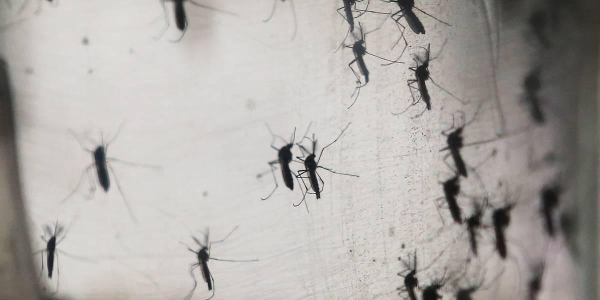 Detectan un tipo de dengue mucho más agresivo en Jalisco