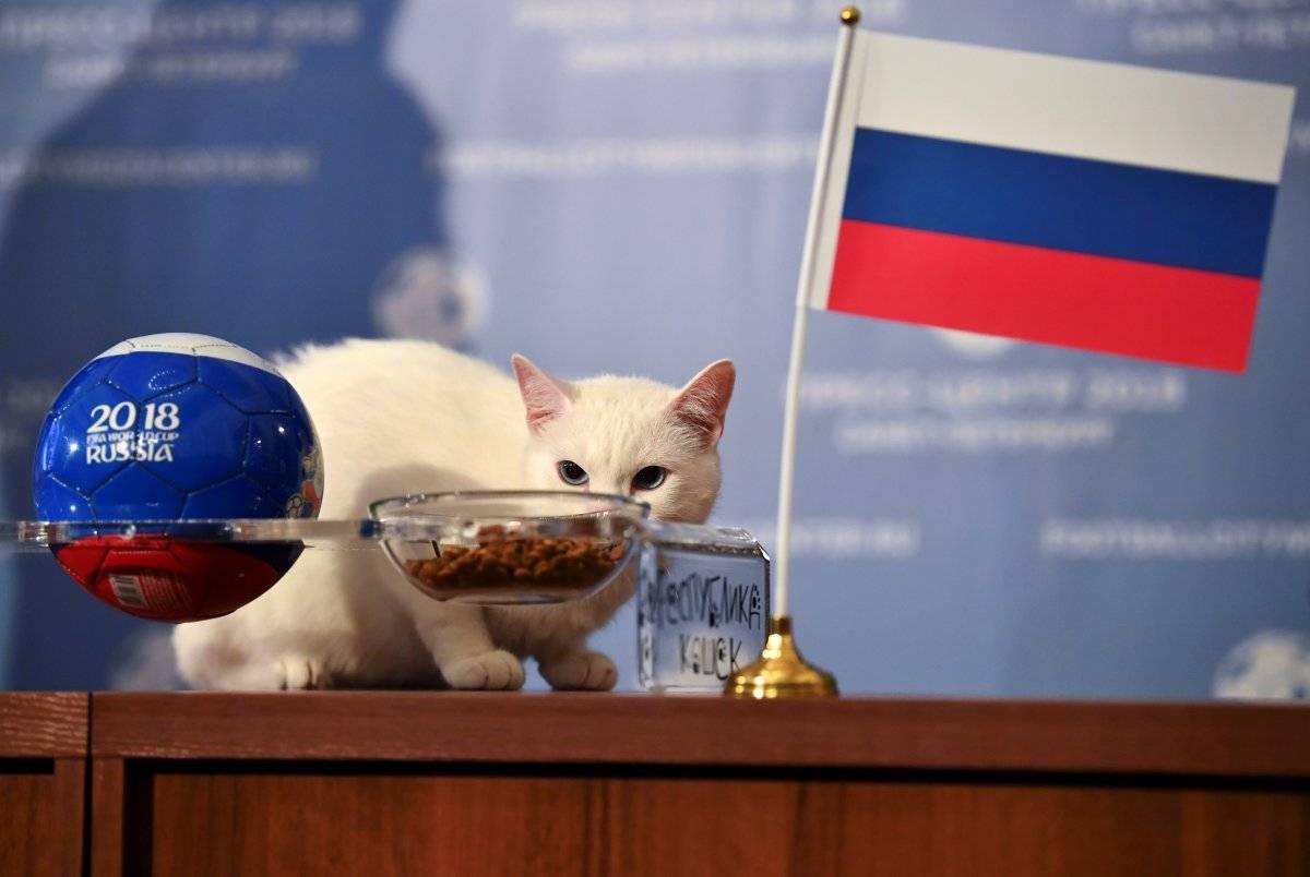 Gato vidente copa do mundo