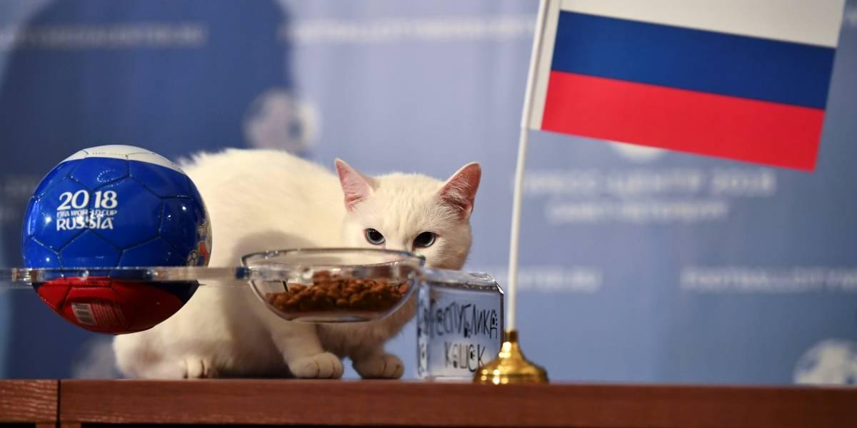 Gato vidente aposta em vitória da Rússia na estreia