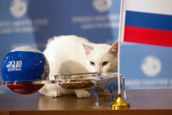 Mundial Rusia 2018: El gato Aquiles predice la victoria de Rusia en el partido inaugural Getty Images