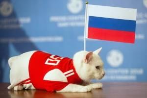 Mundial Rusia 2018: El gato Aquiles predice la victoria de Rusia en el partido inaugural