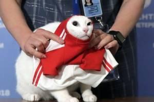 Gato Aquiles