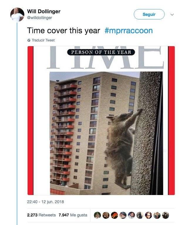 EE.UU: Mapache trepa 23 pisos de un rascacielos y se vuelve viral Twitter