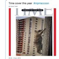 EE.UU: Mapache trepa 23 pisos de un rascacielos y se vuelve viral