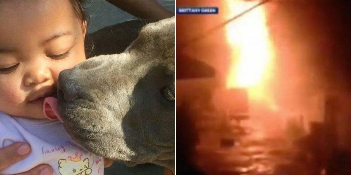 Pitbull agarra bebê pela fralda para salvá-la de casa em chamas