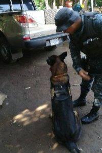 operativo contra el narcotráfico