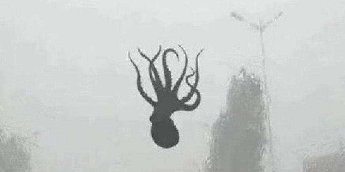 Extraño fenómeno meteorológico hace llover criaturas marinas sobre ciudad de China